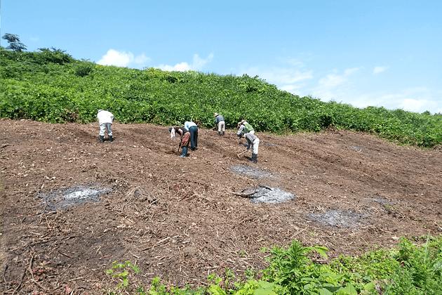 角川かぶ 焼畑