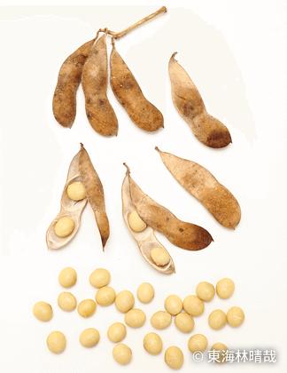 ようのこ豆